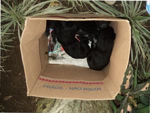 Abandonar animais é crime